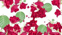 Falling Roses as background video (with alpha) Stock Footage