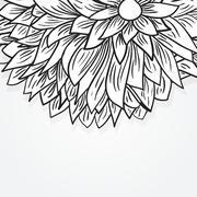 Peony flower Stock Illustration
