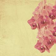textured old paper background with magenta phalaenopsis orchid - stock photo