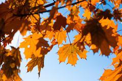 autumn leafs - stock photo