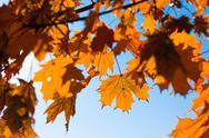 Stock Photo of autumn leafs