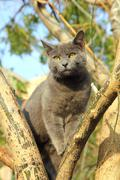 Wandering gray cat sitting on tree Stock Photos