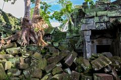 tree in Angkor Wat - stock photo