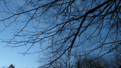 Tree Branches with a Dusk Sky Stock Footage