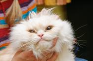 White fluffy cat with widely open eyes Stock Photos