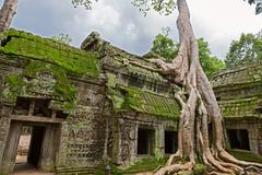 Trees in Ta Prohm, Angkor Wat - stock photo