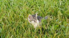 Kitten in gras Stock Footage