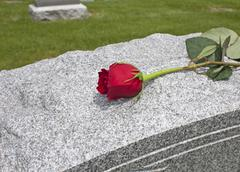 A single rose placed on a grave Stock Photos