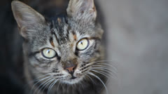 Tabby cat close up Stock Footage
