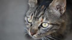 Tabby cat's eyes Stock Footage