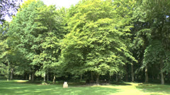 The Last Tree, South African National Memorial, Delville Wood, Somme, France. Stock Footage