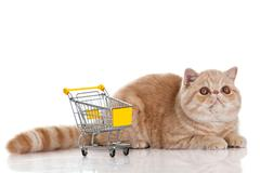 Exotic shorthair cat. cat with shopping cart isolated on white Stock Photos