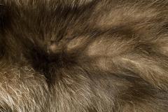 brown polar fox fur. useful as background Stock Photos