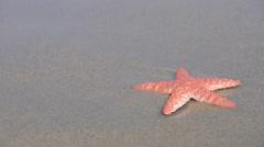 Starfish - sea star - stock footage