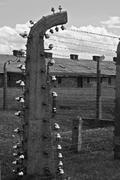 wire fence and barracks in auschwitz - birkenau concentration camp - stock photo