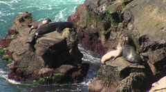 Zoom Out Seals on Rock - stock footage