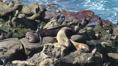Zoom In & Out Sea Lions Birds - stock footage