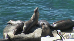 Sea Lions, Pelicans, Great Nats - stock footage