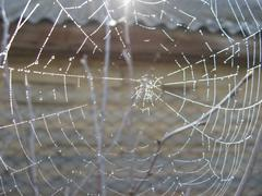 Spider's web with morning dew Stock Photos
