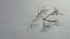 Twiggy Bush Sparkly Snow Shadow time lapse Stock Footage