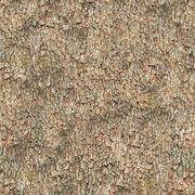 Seamless Texture. Bark. Stock Photos