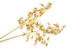 Two stalks of oats Stock Photos