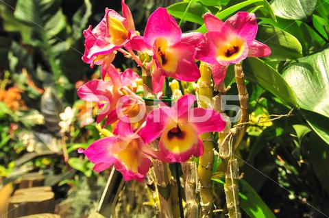Stock photo of pink orchids blooming in backyard garden