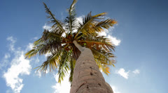 Palm Tree (view from below) Stock Footage