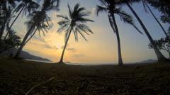 Costa Rica Palms Hermosa Stock Footage