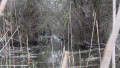 Creepy swamp Stock Footage