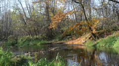 Park river water flow closeup autumn broken tree leaf fall shore Stock Footage