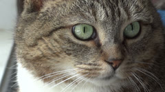 Close Up of Cat Face Stock Footage