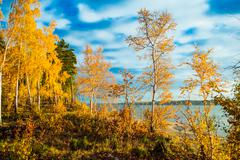 Colorful and bright autumn forest Stock Photos