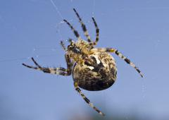 big spider on the web - stock photo