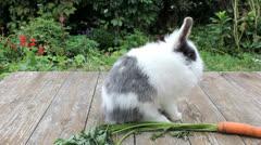 Little rabbit Stock Footage