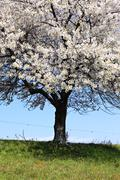 white spring - stock photo