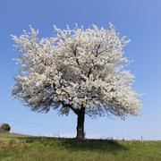 white tree square - stock photo