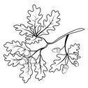 Oak branch with acorns, outline Stock Illustration