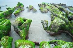 Rocky seacoast full of green seaweed Stock Photos