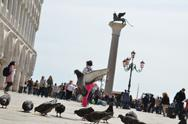 Stock Photo of doves on square in venice