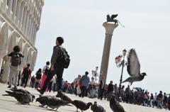 birds in venice - stock photo