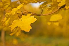 Fall - yellow leaf over blurred colorful background Stock Photos
