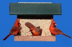 Cardinals on a feeder Stock Photos