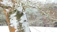 Pretty Blonde Girl Throwing Snow Winter Countryside Stock Footage