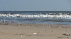 Sanderlings in ocean surf Stock Footage