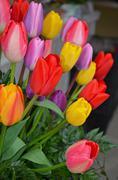 Colorful spring tulip arrangement Stock Photos