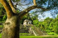 Palenque Tree and Temple Stock Photos