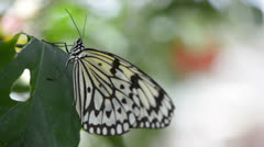 Butterfly resting on a leaf Stock Footage