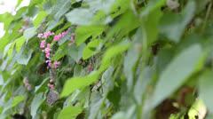 Butterfly is feeding on flower Stock Footage