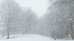 Ethereal winter landscape with falling snow - stock footage